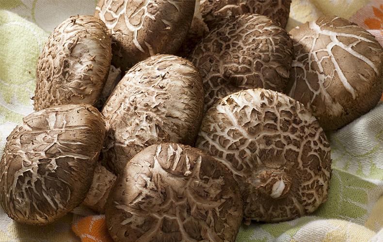 之星菇中林海,勤劳人的金元宝礼泉东关情况初中咸阳营养餐图片
