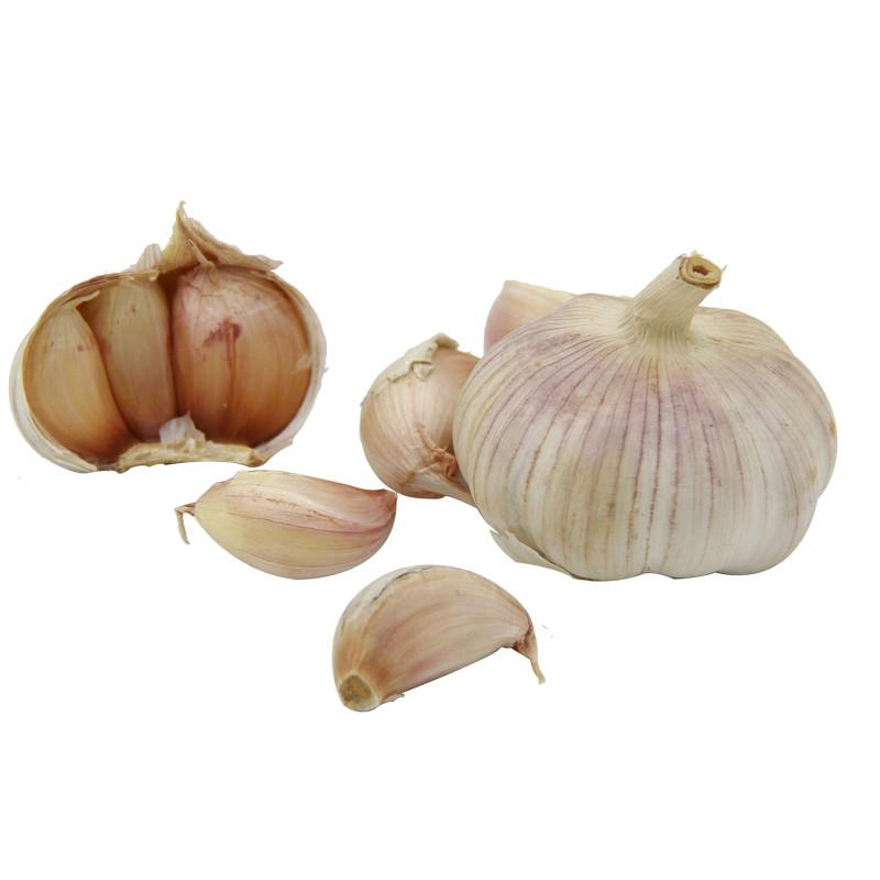 绿鲜知 大蒜 约450g 自营蔬菜
