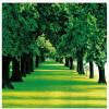 Обои для рабочего стола Зеленые деревья трава фон обои гостиная спальня диван фон обои роспись фон для презентации черный