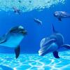 Пользовательские обои 3D Mural Обои Подводный мир Дельфин Потолок Mural Гостиная Спальня Подвесная стена Живопись Декор Обои