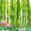 Пользовательские обои для рабочего стола 3D для стен 3 D Lotus Flower Bamboo Forest Wall Painting Гостиная Спальня Mural Обои Домашний декор пользовательские фото обои bamboo forest art wall painting living room tv background mural home decor обои papel de parede 3d