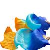 Шелковые поклонники танца живота Цвет градиента Аксессуары для танцев Танец танца живота Королевский синий+бирюзовый+оранжевый мицелий грибов шампиньон королевский субстрат объем 60 мл