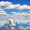 Пользовательские 3D-обои для фото HD Swan Seagull Blue Sky и белые облака Sea Sofa TV Заставка Обои на рабочий стол Обои Papel De Parede 3D blue sky чаша северный олень