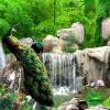 3D Настенная живопись Природные пейзажи Обои Пейзаж Бамбуковый лес Фоллс Павлиний Постельные принадлежности 3D Нетканые обои Бумага ТВ Фон пользовательские mural естественный пейзаж обои лес 3d пейзаж фона настенная живопись гостиная спальня настенная бумага домашнее украшение