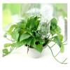 mymei Автоматический полив орошение Колос садовое растение цветок Капельный Разбрызгиватель воды капельный полив цена 2012 года купить город днепропетровск украина