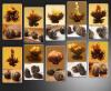 30 бутонов ассорти черный Цветущий чай * бесплатная доставка бесплатная доставка водные колонки