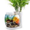 Одд бетта аквариумных рыб переполнения бака природные особенности маленький цилиндр мини аквариум аквариум стеклянный аквариум Desktop небольшой экологический аквариум аквариум BG75 белый цилиндр небольшой аквариум на стену питер