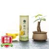 Чэн Хаи Хуан Джу Уайт чай хризантемы 30г панавир гель 30г