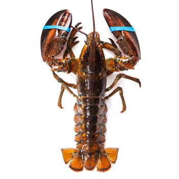 【活鲜】Gfresh 加拿大龙虾(波士顿龙虾)650-750g 只 海鲜水产