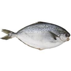 丰度 青岛活冻雪花鲳鱼 500g 袋装 平鱼海鲜