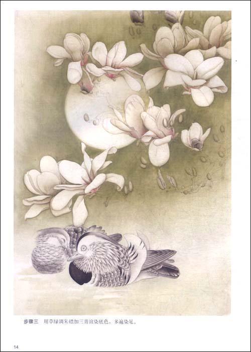 目录  概述  玉兰生态结构  玉兰从花蕾到盛开  玉兰花的结构