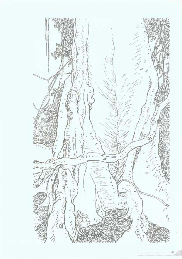 雨林简笔画