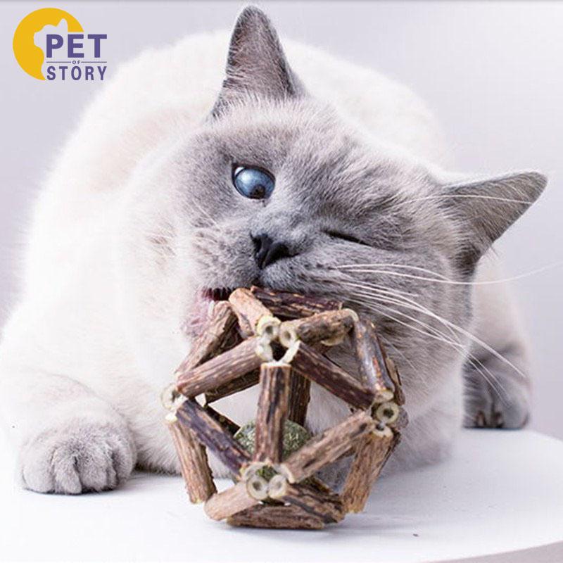 逗猫^国产^天寥木^成猫