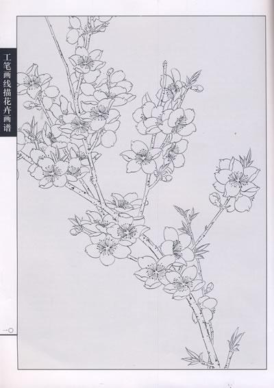 工笔画线描花卉画谱 桃花篇 李善杰 绘 天津杨柳青画社 9787807384694图片