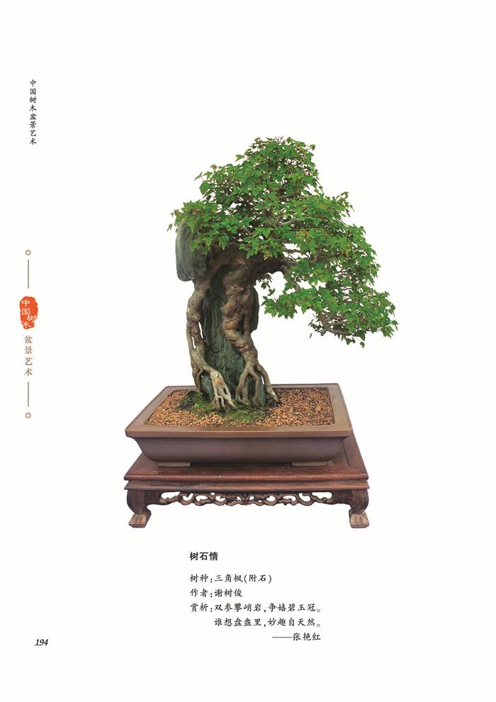 创作思想,造型特点,制作技法,附有大量树木盆景精品力作的彩色图片,以图片