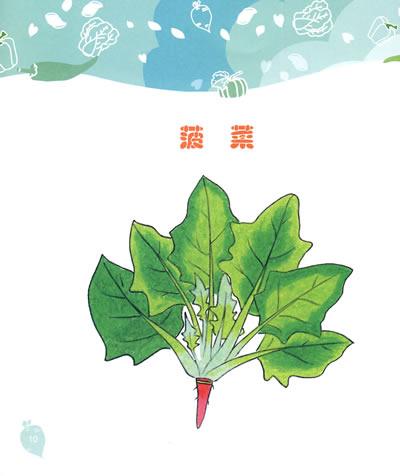 菠菜的画法步骤