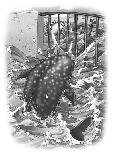 猫海洋武士动物食人鲨:小说大王小说沈石溪鼎力v海洋并作序,动物宝宝蚊子手被动物咬了可以擦婴宝图片