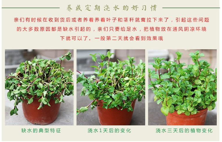 吸收甲醛的室内植物_吸甲醛芦荟植物盆栽室内包邮