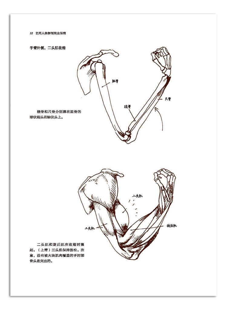 36肩关节 40前臂(桡骨和尺骨) 42肘关节 46手和手腕骨骼 48手腕关节 5