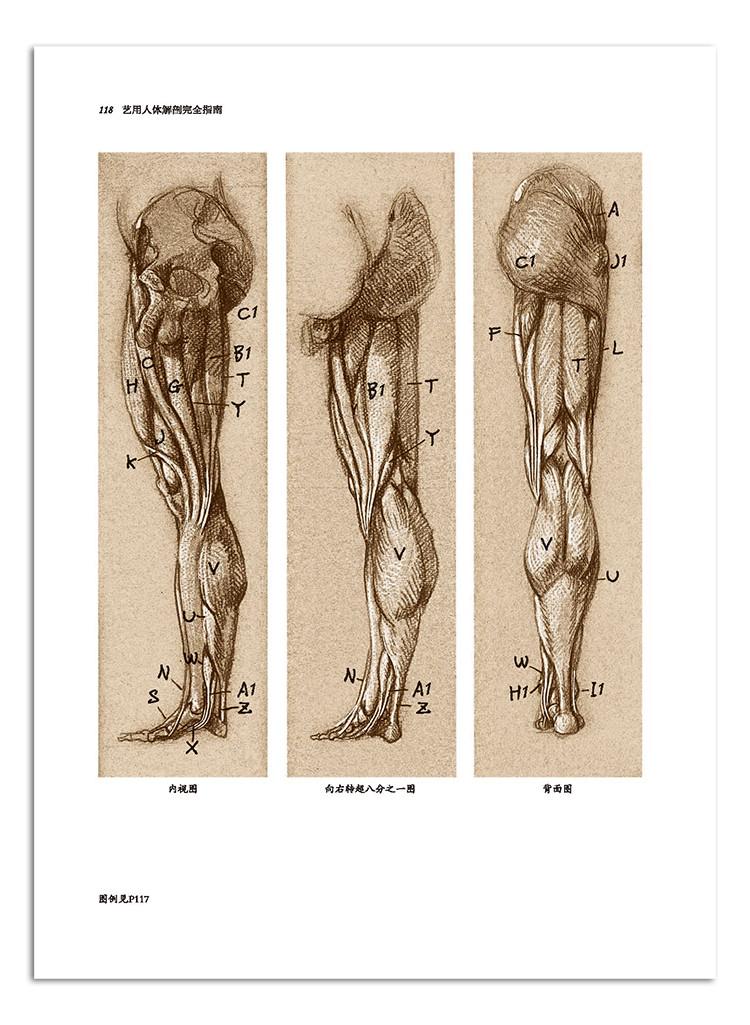 36肩关节 40前臂(桡骨和尺骨) 42肘关节 46手和手腕骨骼 48手腕关节