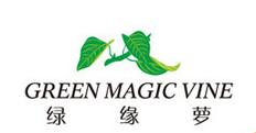 绿缘萝(GREEN MAGIC VINE)