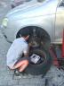 【車豬豬】換剎車片安裝服務 工時費 更換剎車片 剎車片工時 輪胎店 汽車保養店 前片 實拍圖