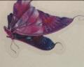 麥朵 仿真蝴蝶墻貼畫貼紙開關貼冰箱貼兒童房間裝飾品9只裝 小蝴蝶9只 實拍圖