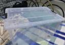 清野の木 藝術家系列 56L灰色三個裝特大號 塑料收納箱整理箱環保加厚儲物箱 實拍圖