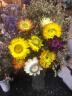 干花 真花 云南 麥桿菊 七彩菊 小菊花 家居裝飾 干花束 滿天星 七彩菊一束(10朵) 干花包 實拍圖