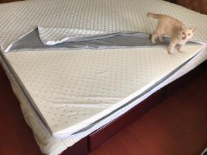 金橡树床垫怎么样