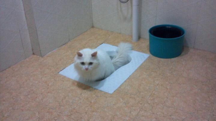 澳路雪猫香波 专业赛级配方香波400ml 猫咪沐浴露 晒单图
