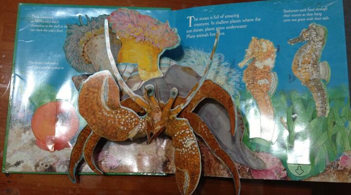 Undersea Animals[深海动物] 晒单图