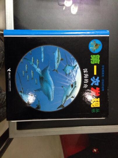 深海的鱼(精)/手电筒系列/*次发现丛书 晒单图