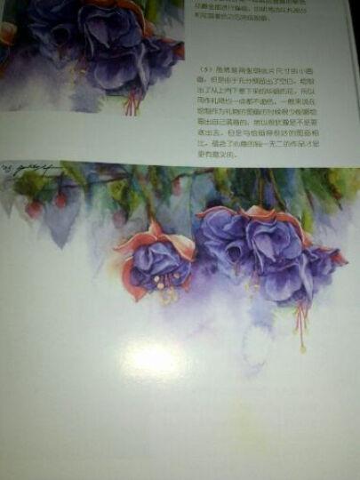 水彩画手绘教室:花卉篇 晒单图