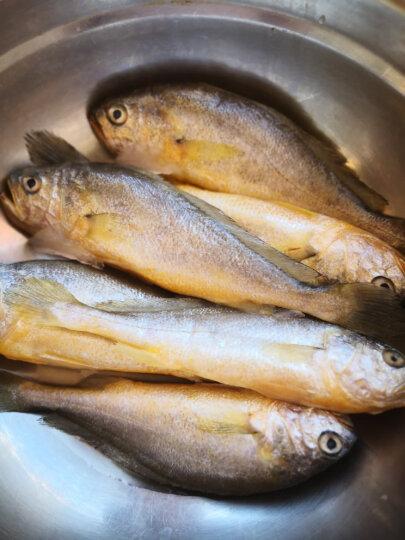 丰度 青岛活冻小黄花鱼 6-8条 400g 盒装 海鲜水产 晒单图