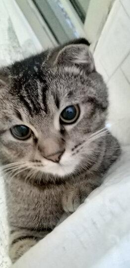 谷登猫咪营养膏120g猫营养膏幼猫英短美短猫美毛幼猫怀孕哺乳猫咪速补营养膏宠 晒单图