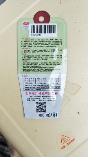 DS 翡翠鸡毛菜 北京东升种业 蔬菜种子 全年播种 抗病耐热湿抗抽苔 10g/袋 晒单图