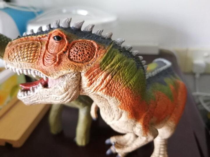 思乐儿童玩具恐龙玩具男孩仿真动物模型早教认知侏罗纪镰刀龙14529 晒单图