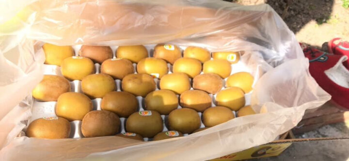 Zespri佳沛 新西兰阳光金奇异果 12个装 优选25-27号果 单果重约124-145g 水果礼盒 自营生鲜 晒单图
