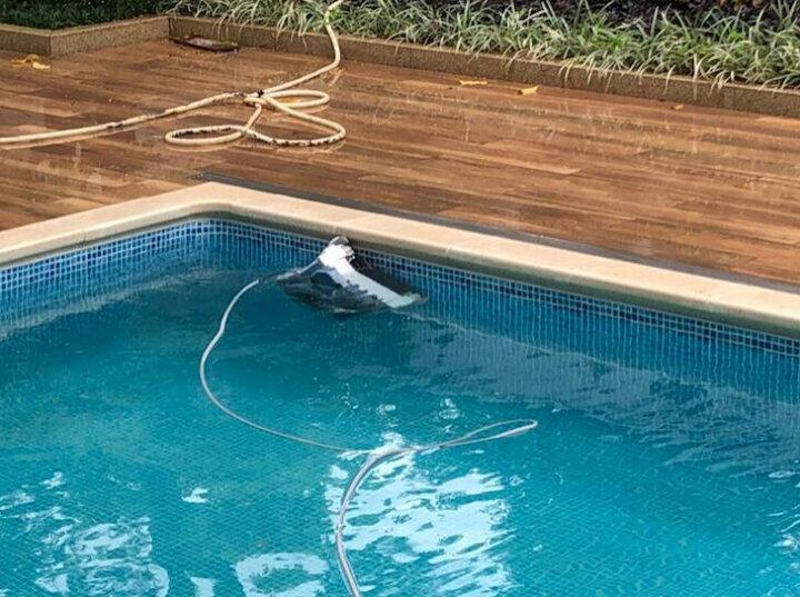 亨沃游泳池吸污机彩鲨全自动吸污机水龟池底吸污器水池底机器人水下吸尘器无人机过滤吸污机美国进口 彩鲨叶轮(不含机器) 晒单图