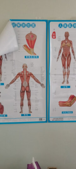 人体经络穴位标准挂图(女性)(3张)中医人体经络挂图 家庭保健养生医学 人体医学挂图 晒单图