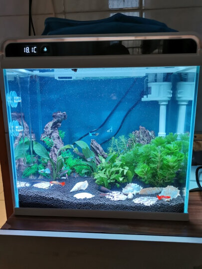 森森鱼缸造景海螺贝壳装饰品石螺珊瑚工艺摆件水族箱造景 千手螺1个 FZ-28 晒单图