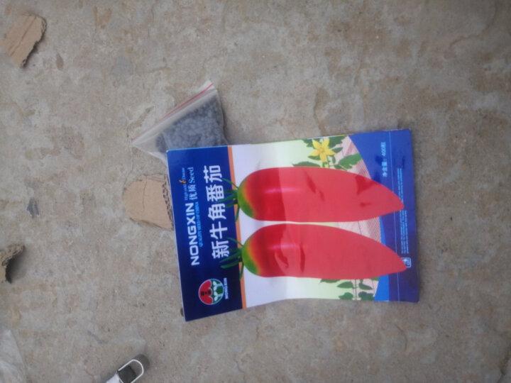 民汇园 蔬菜种子 蔬果种子 圣女果种子 黑 绿 黄 红色 西红柿珍珠樱桃小番茄种子 黑樱桃番茄约1000粒 晒单图
