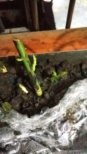 免邮{买二送二}植物花卉盆栽快速生根粉剂绿植花肥土肥植物生长剂盆栽肥料移栽种植花肥料 土虫丹 晒单图
