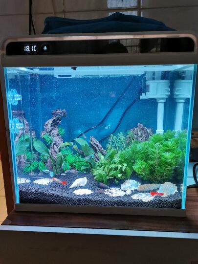 森森鱼缸造景海螺贝壳装饰品石螺珊瑚工艺摆件水族箱造景 金斧螺1个 FZ-30 晒单图