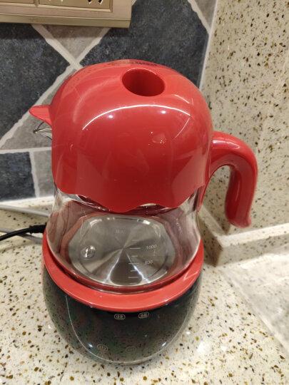 小白熊 (Snow Bear) 恒温调奶器800ml  多功能冲泡奶粉机恒温暖奶器水壶  HL-0856 晒单图