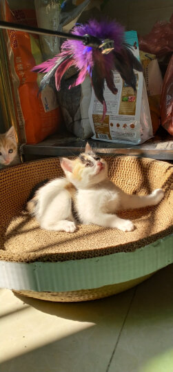 欧力优猫粮双蛋白运动粮全价猫粮成猫幼猫通用型 欧力优全价猫粮10kg 晒单图