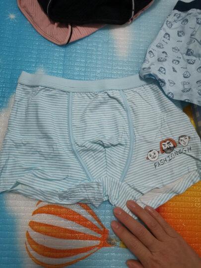 红豆(Hodo)男童内裤中大童A类标准三条平角盒装小孩卡通印花四角裤HDK787 140 晒单图