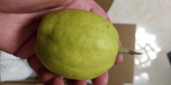 京选 新疆特级库尔勒香梨 单果120g以上 净重2.5kg 生鲜水果 健康轻食   晒单图