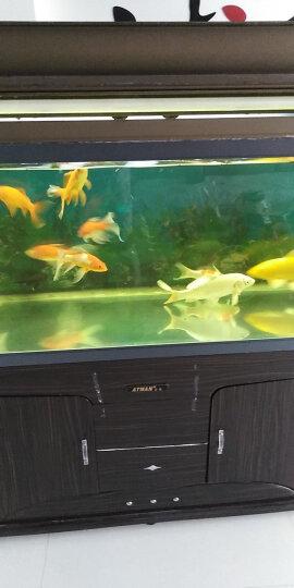 彩锦王(KOIKING)鱼粮锦鲤育成鱼食鱼饲料454g(3.5mm) 晒单图